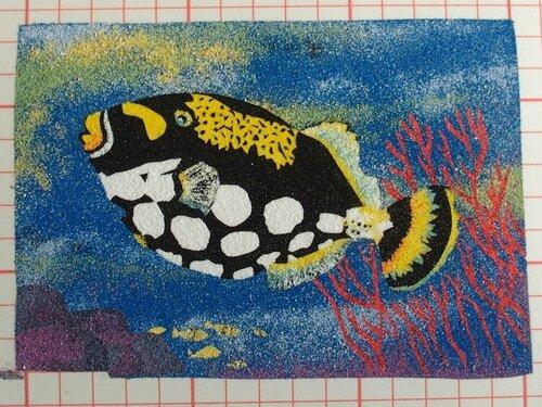cadre poisson 7