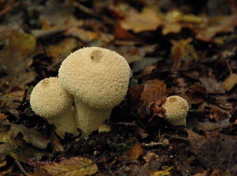 20161025_nature_plante_champignon_052