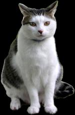 icone Paloma