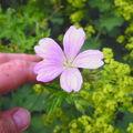 Printemps - été 2008 fleurs