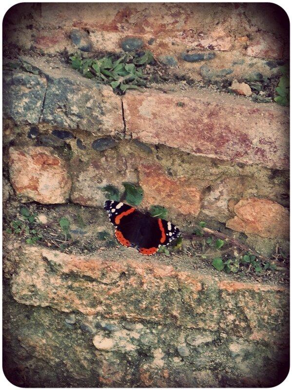 papillontoulouse