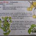 Les fruits du gingko, de kenji miyazawa (1896-1933)