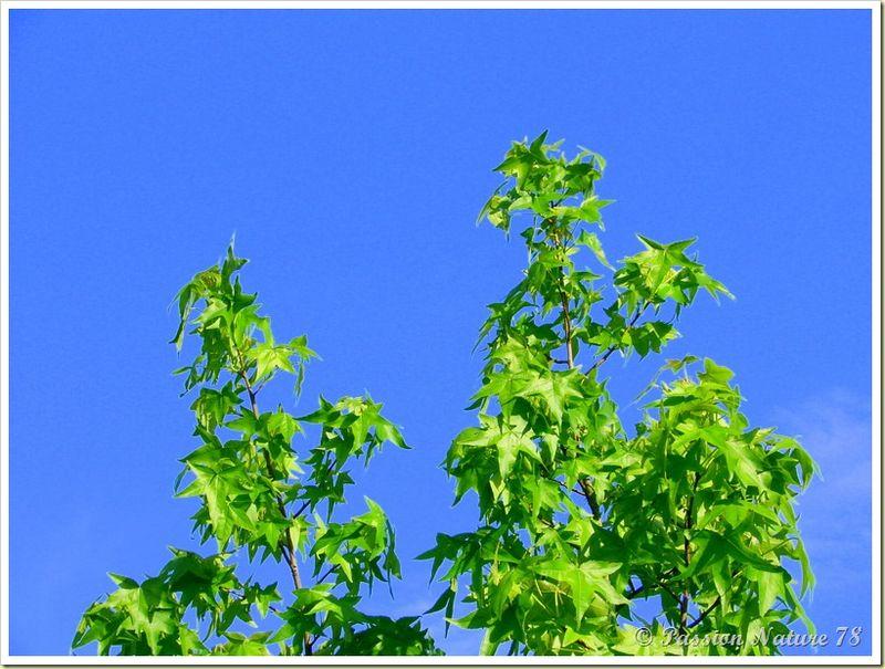 Mon jardin sous un autre angle (22)