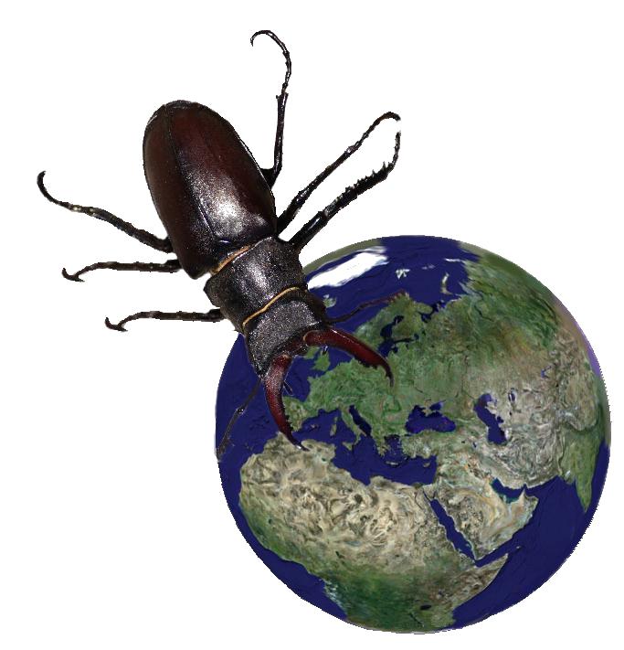 insectesmonde
