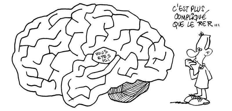 intérieur cerveau