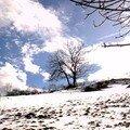 arbre neige nuages