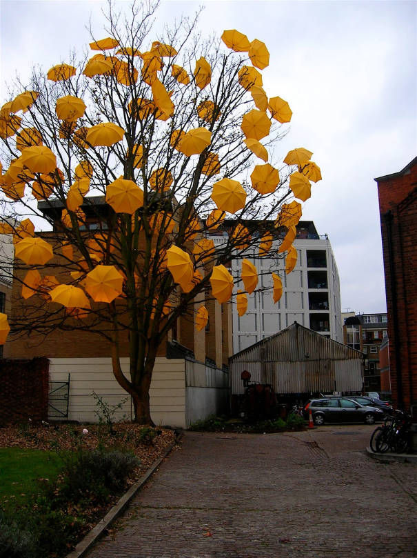 sam-spenser-umbrella-tree
