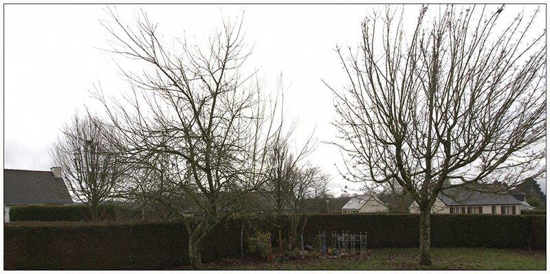 arbres jardin