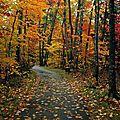 Aujourd'hui c'est l'automne...