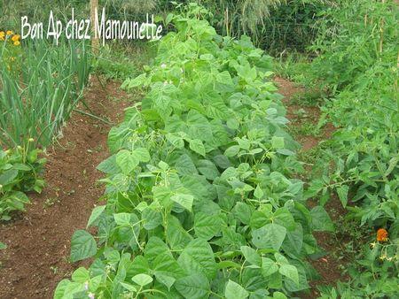 Jardin__haricots__tomates__salades__surfinia_003