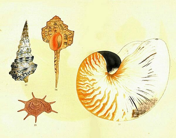 The Illustrations of a Thousand Shells by Yoichirō Hirase