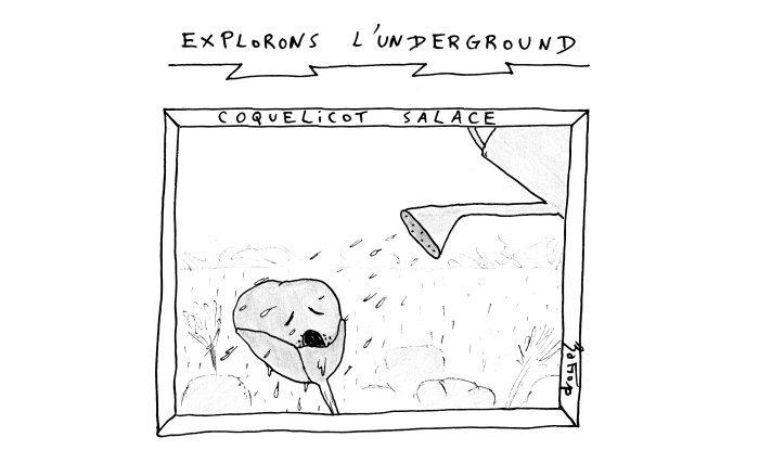 underground coquelicot