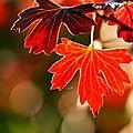 L'automne est bien là .