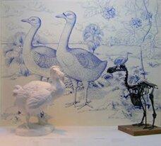 Dodo sculpté et squelette de dodo (c) Muséum de la Réunion