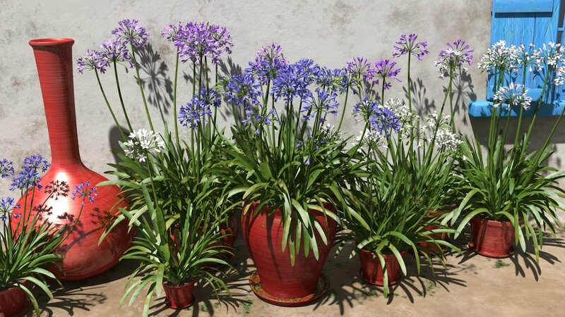 3D plant model perenial TPF The Plant Factory Agapanthus praecox (Blue Lily) image 1