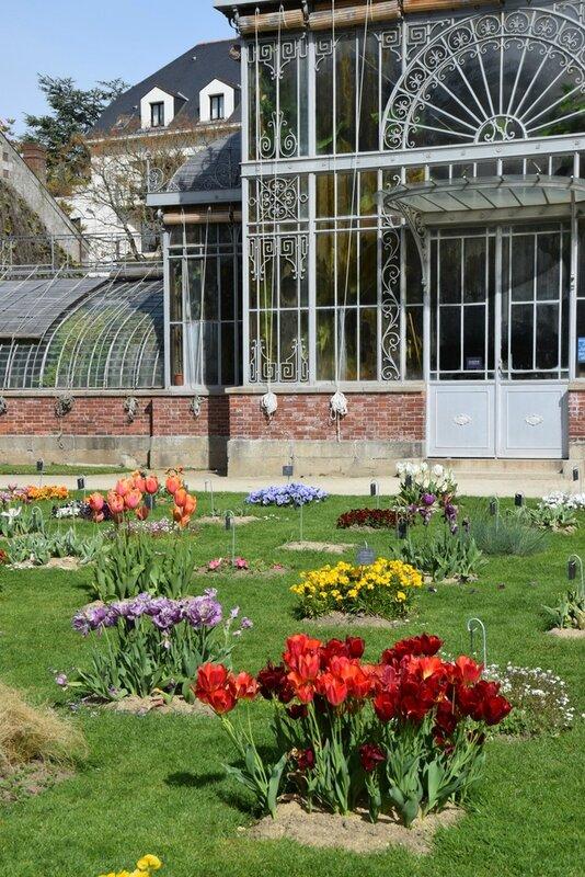 Photographie de fleurs au jardin des plantes de nantes le for Jardin des plantes nantes 2016