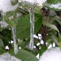 Il y aura toujours en hiver, une fontaine sur le
