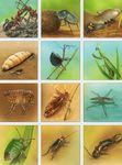 imagerie_insectes_recto_1
