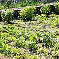 47.2 mon jardin potager et d'agrément