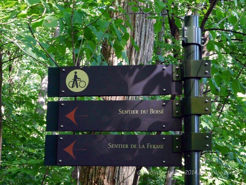 Bois-de-Coulonge-AlléeSieurDeCoulonge-02