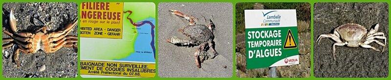 mort_crabe