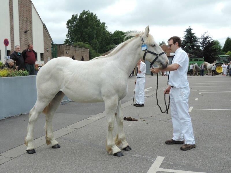 Fanie de l'Ecurie - 21 Juin 2016 - Concours d'élevage local - Thérouanne - 2e (1 an)