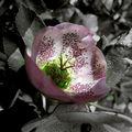 Le printemps (1)