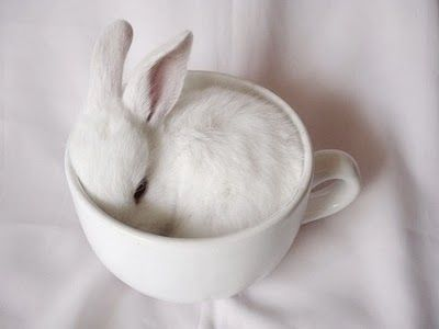 adorable_bunneh____cute_sweetness_bunny_rabbit_b568b673cd65080f4edd71e58c242e45_h