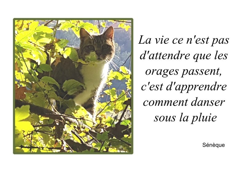 CITATION LA VIE