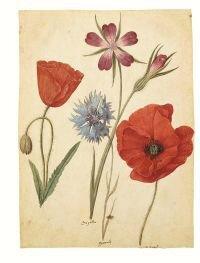 Jacque Le Moyne de Morgues, feuilles d'études 1555 1560