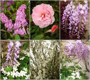 Fleurs_de_mai_2
