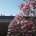 Magnolias forever
