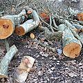 Quartier drouot - abattage d'arbres (encore)...
