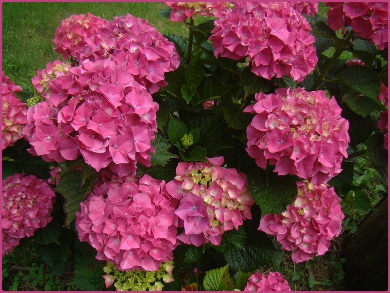 fleurose1