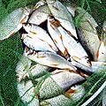 Les poissons : fiches descriptives