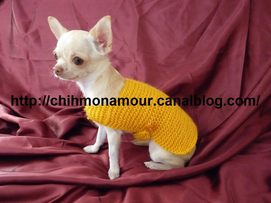 tricot pour chihuahua