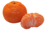 satsuma_citrus_unshiu