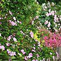 Flou de roses_13 11 06_4307