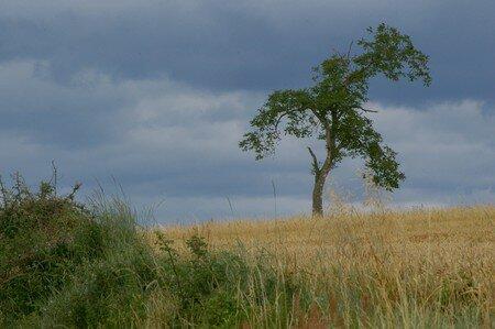 talus_et_arbre