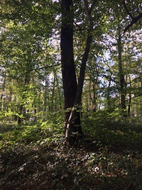 balade en forêt 2