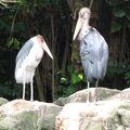 Jurong birds park 180