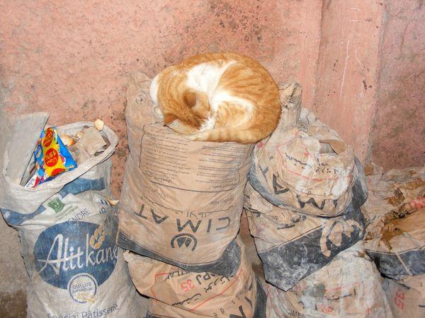 Maroc-marrakech-rues-streets-cat (8)