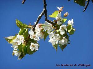 Bonjour printemps (2)