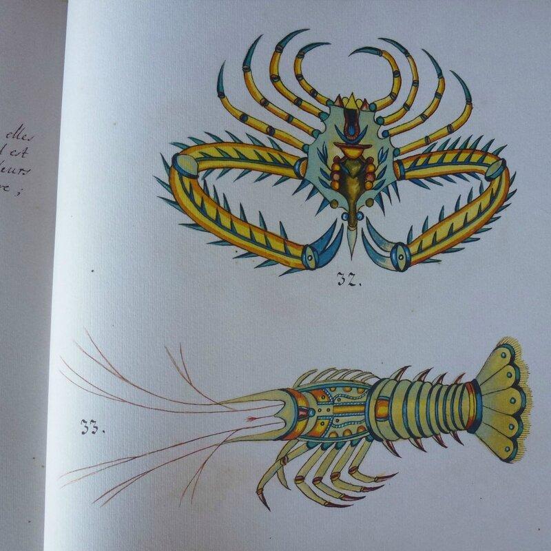 poissons tropicaux 2