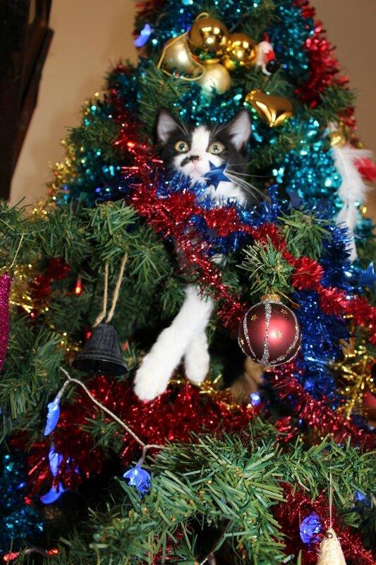 Chat-Noël 3