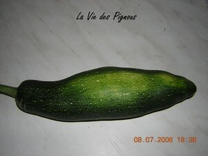 1_re_courgette