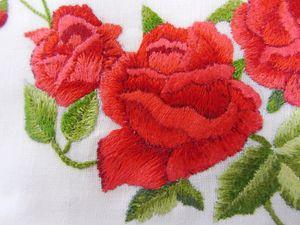 la rosa di Paola (1)