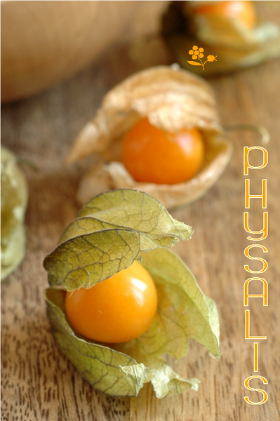 Physalis_2