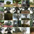 Les arbres