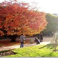 automne, jardin des plantes